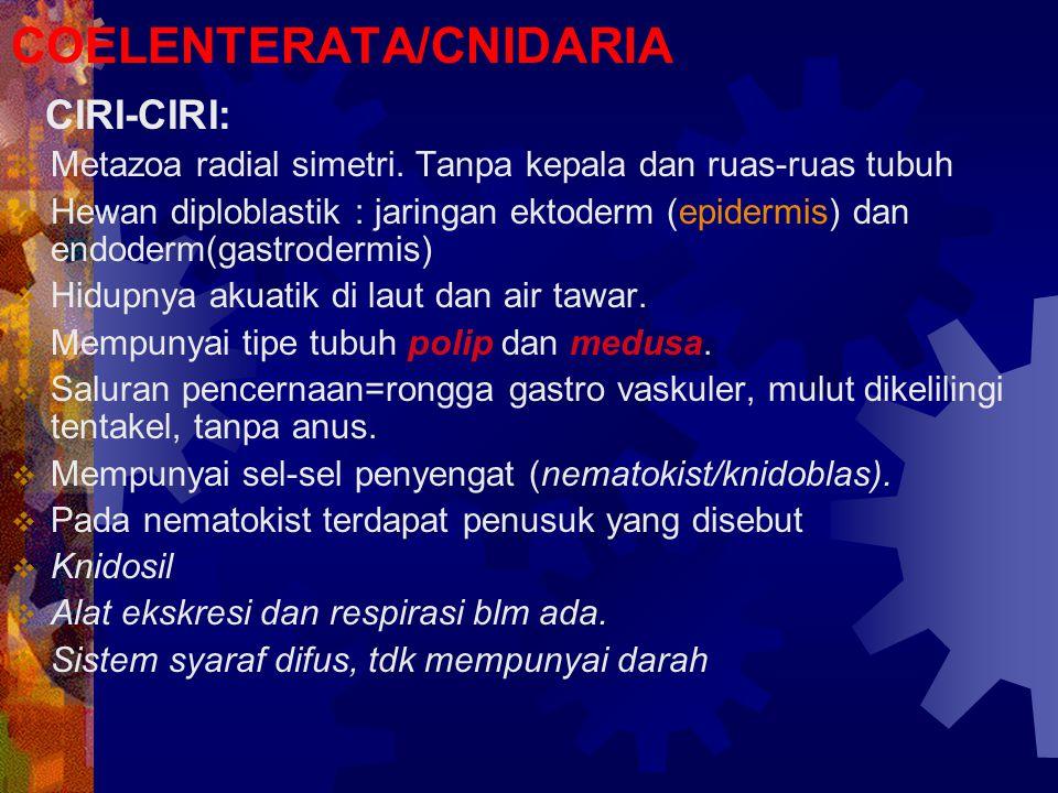 COELENTERATA/CNIDARIA