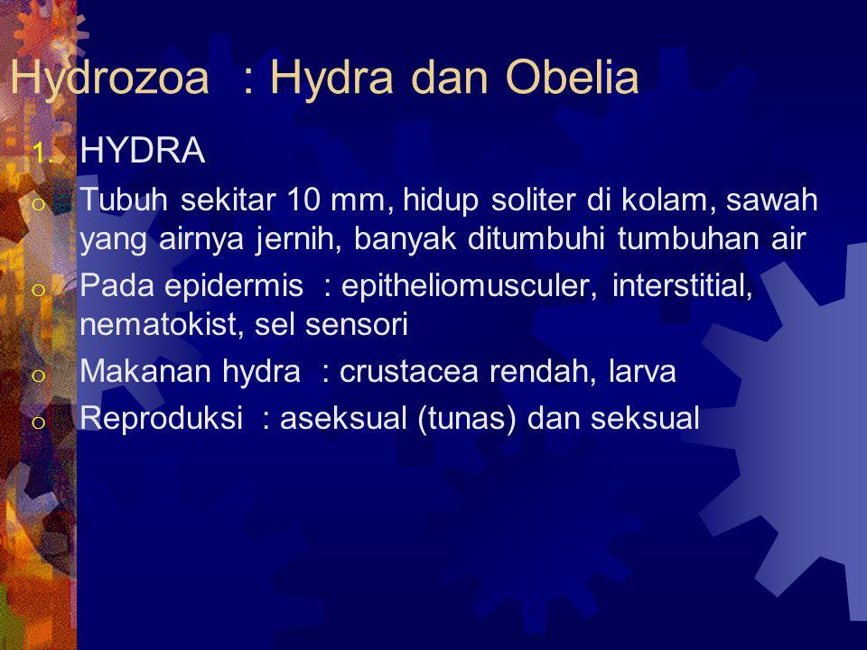 Hydrozoa : Hydra dan Obelia