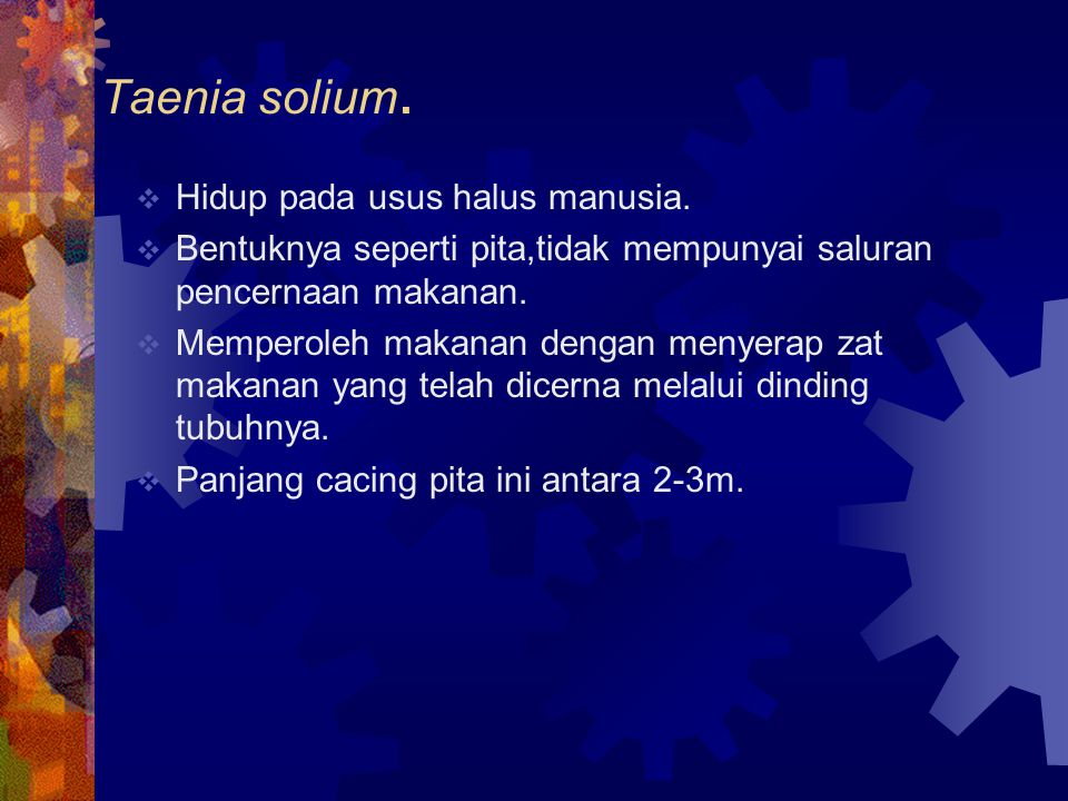 Taenia solium. Hidup pada usus halus manusia.