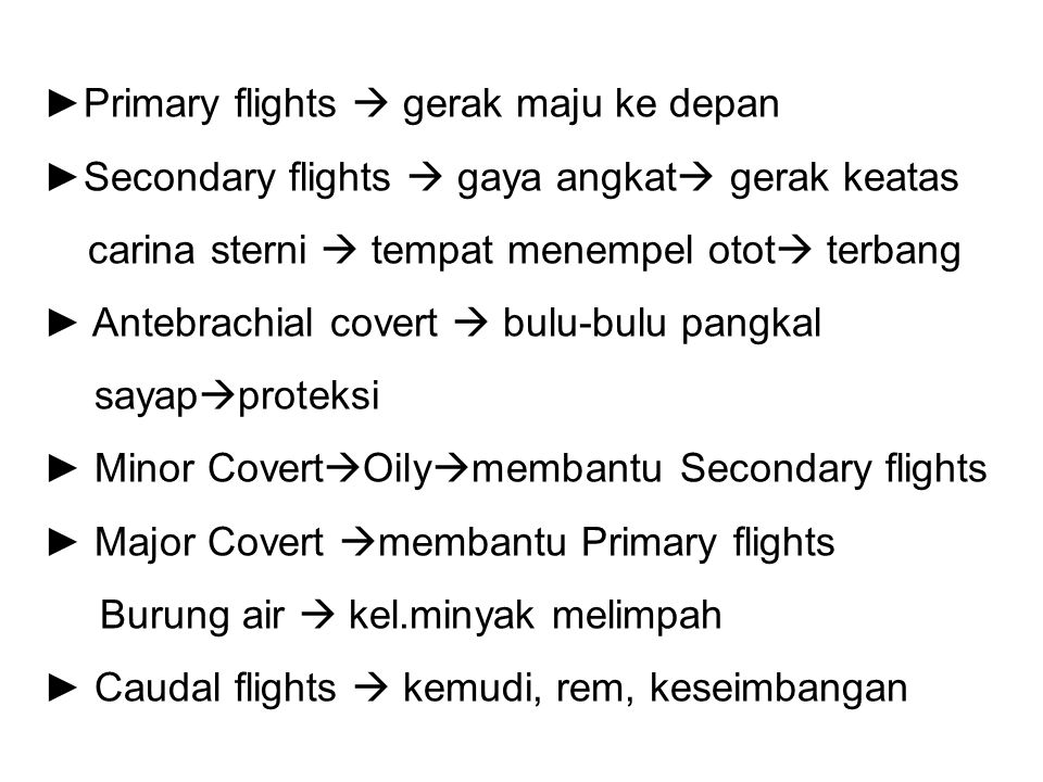 Primary flights  gerak maju ke depan