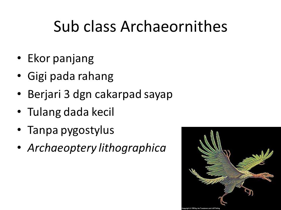 Sub class Archaeornithes