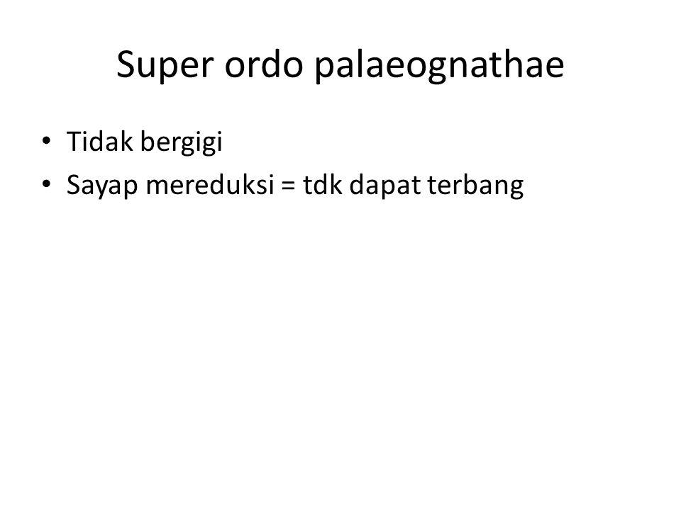 Super ordo palaeognathae