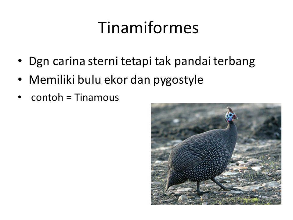 Tinamiformes Dgn carina sterni tetapi tak pandai terbang