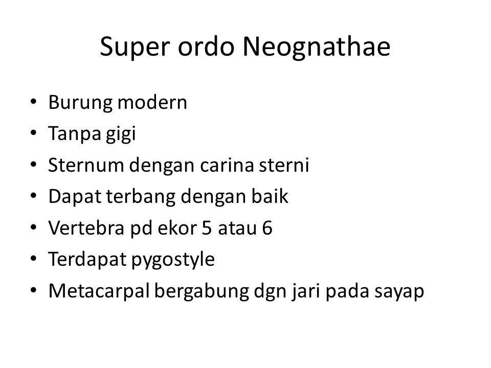 Super ordo Neognathae Burung modern Tanpa gigi