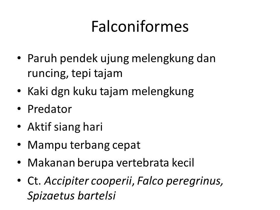 Falconiformes Paruh pendek ujung melengkung dan runcing, tepi tajam