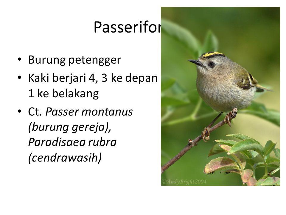 Passeriformes Burung petengger
