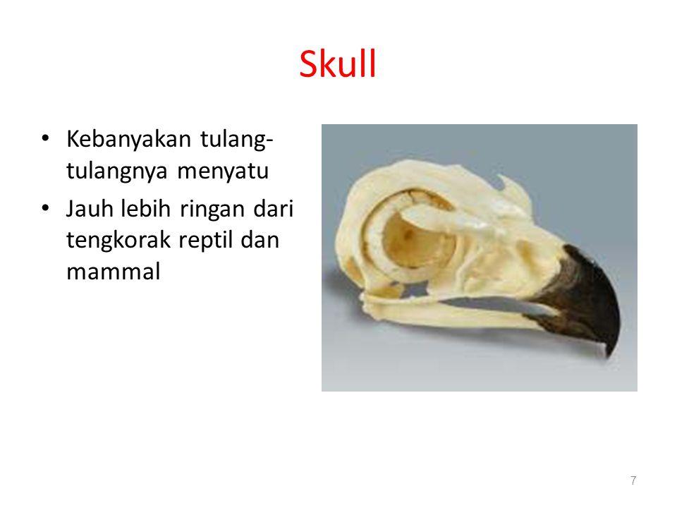Skull Kebanyakan tulang-tulangnya menyatu