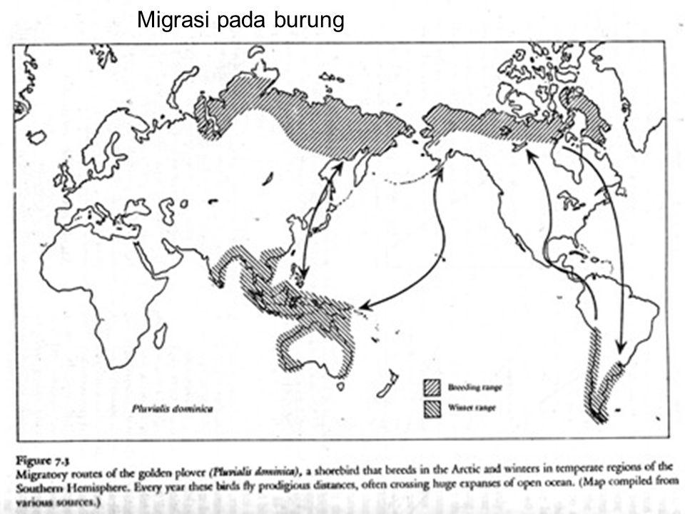 Migrasi pada burung