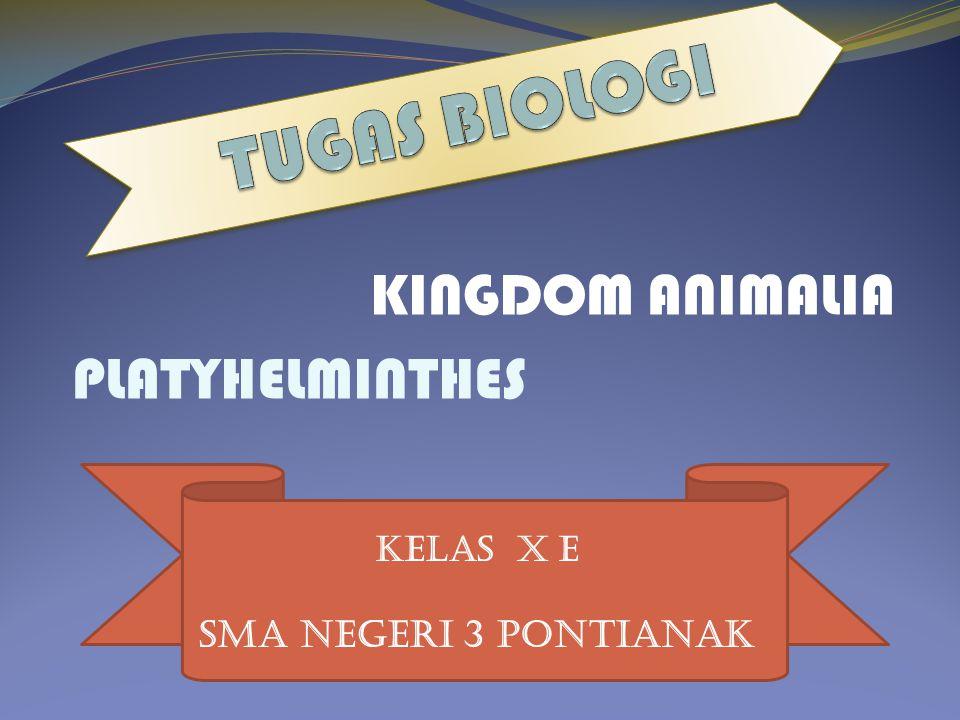 TUGAS BIOLOGI KINGDOM ANIMALIA PLATYHELMINTHES SMA NEGERI 3 PONTIANAK