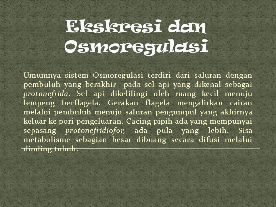 Ekskresi dan Osmoregulasi