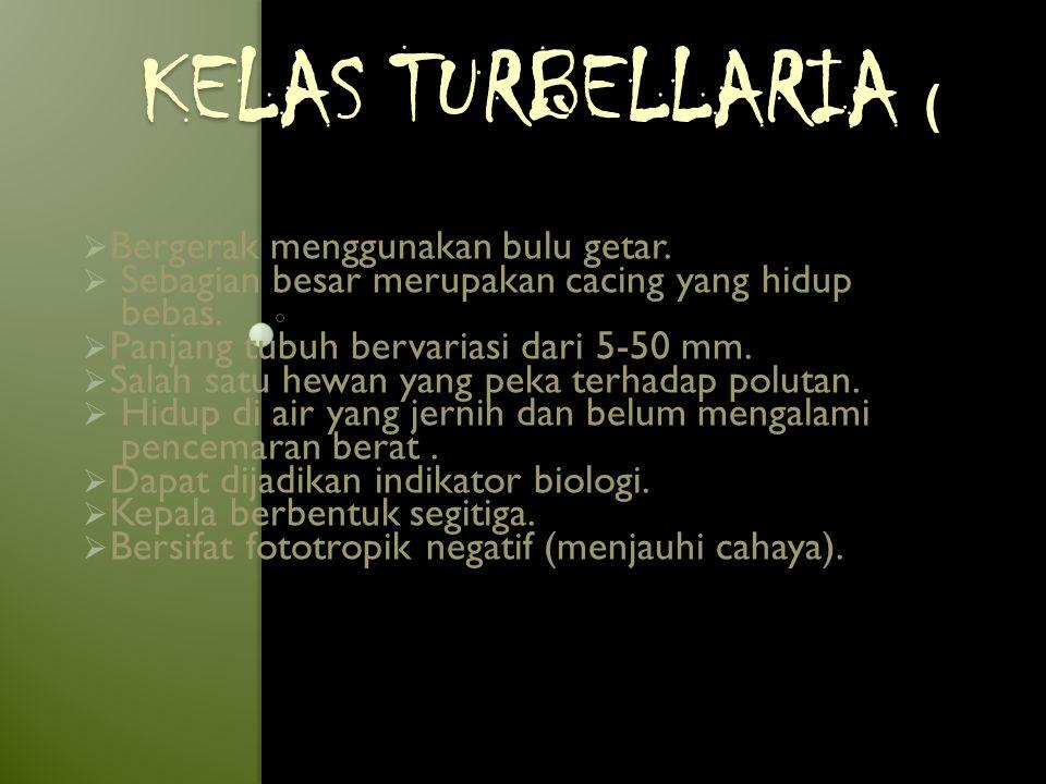 Kelas Turbellaria ( Bergerak menggunakan bulu getar.