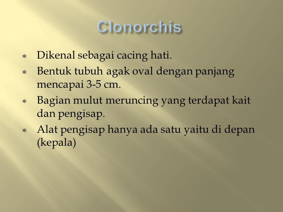 Clonorchis Dikenal sebagai cacing hati.