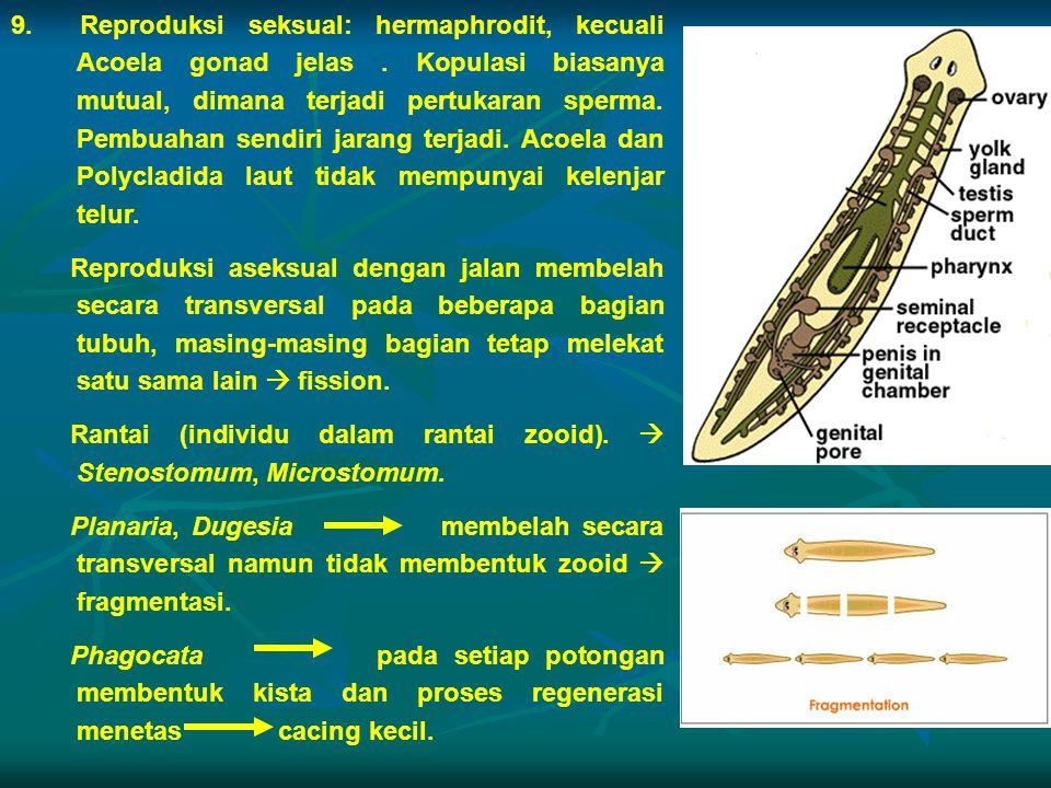 9. Reproduksi seksual: hermaphrodit, kecuali Acoela gonad jelas