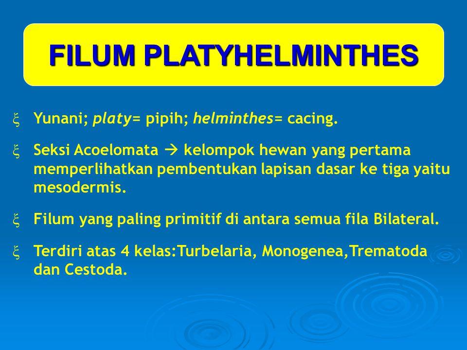FILUM PLATYHELMINTHES