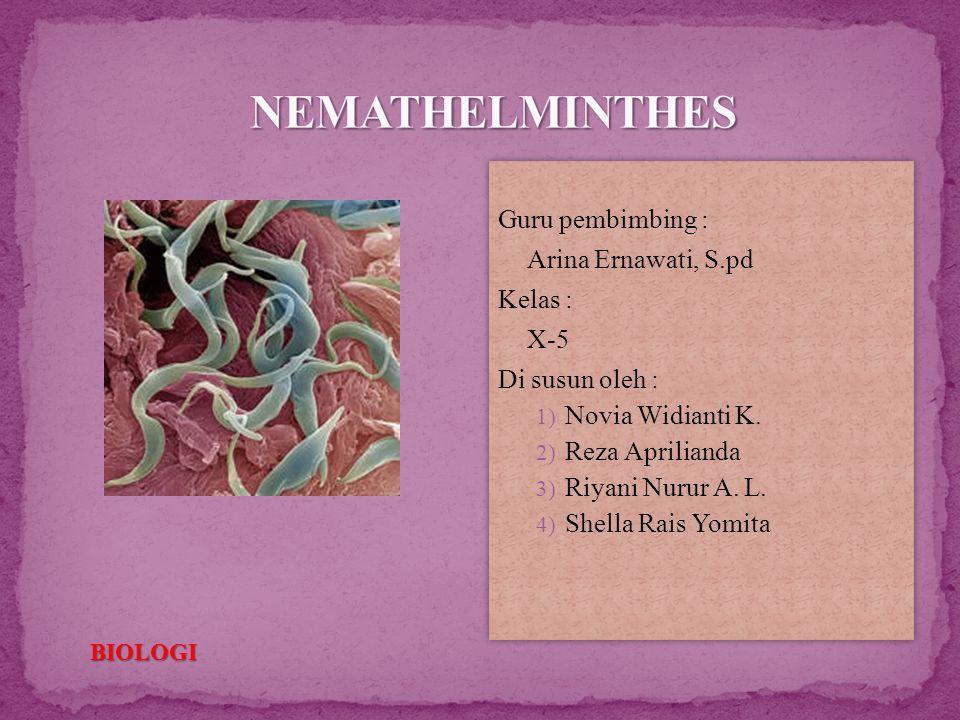 NEMATHELMINTHES Guru pembimbing : Arina Ernawati, S.pd Kelas : X-5