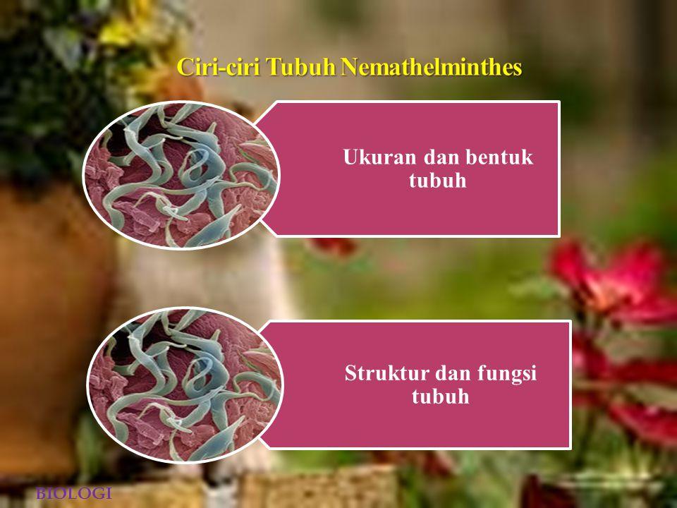 Ciri-ciri Tubuh Nemathelminthes