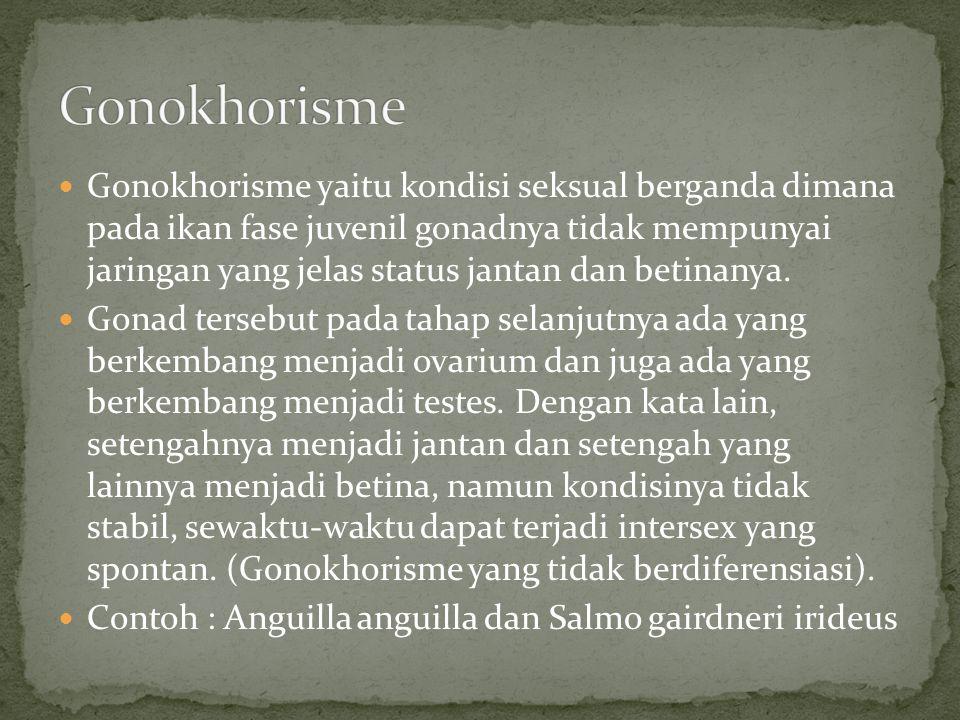 Gonokhorisme