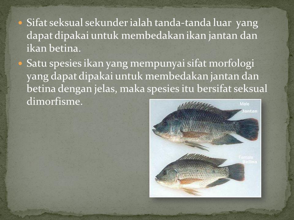 Sifat seksual sekunder ialah tanda-tanda luar yang dapat dipakai untuk membedakan ikan jantan dan ikan betina.
