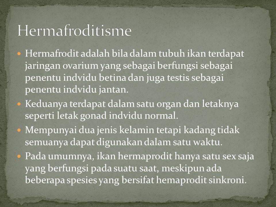 Hermafroditisme