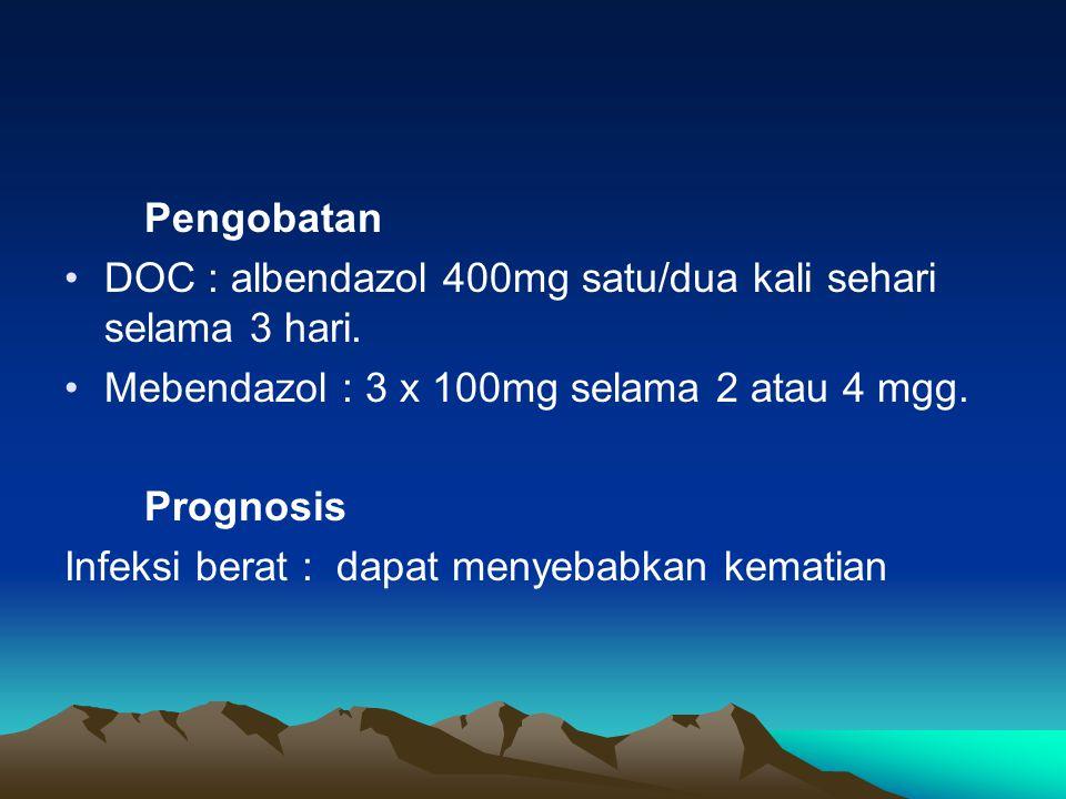 Pengobatan DOC : albendazol 400mg satu/dua kali sehari selama 3 hari. Mebendazol : 3 x 100mg selama 2 atau 4 mgg.