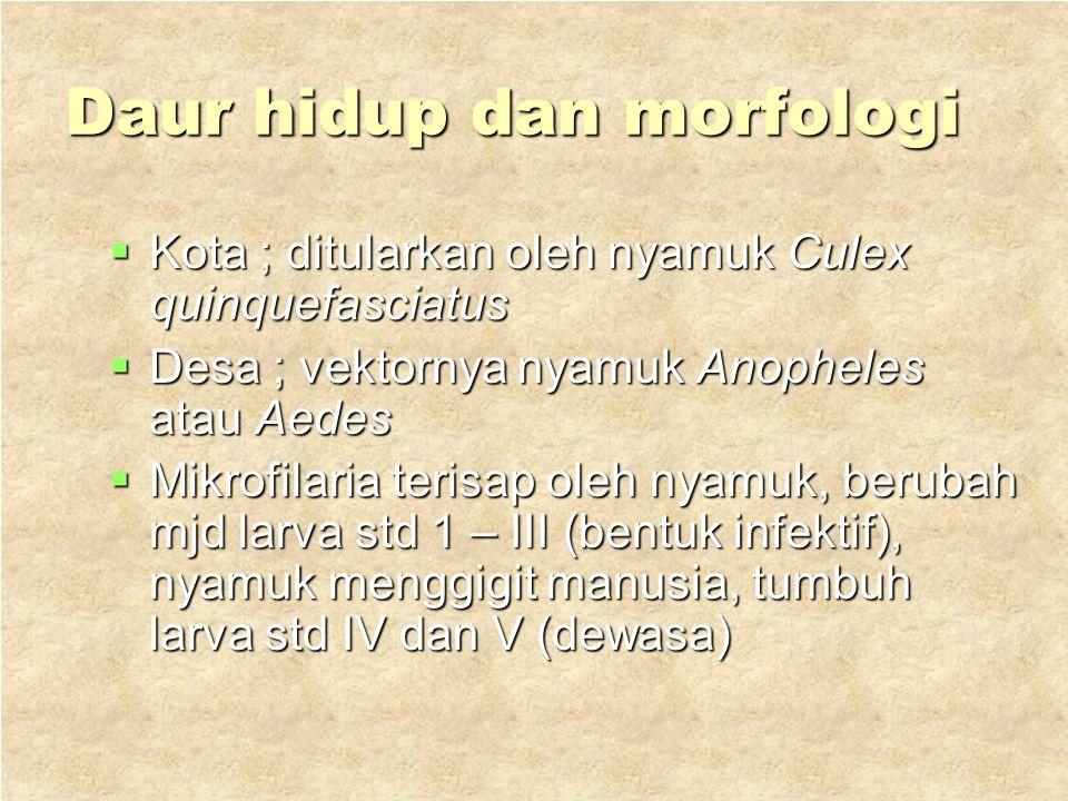Daur hidup dan morfologi