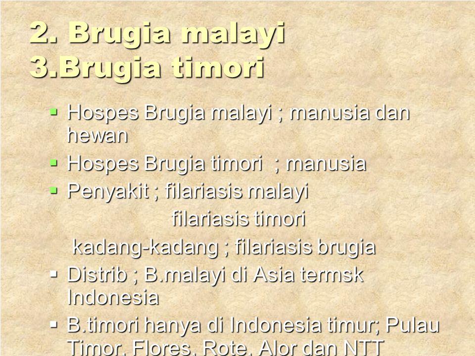 2. Brugia malayi 3.Brugia timori
