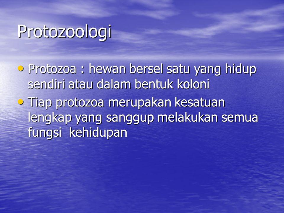Protozoologi Protozoa : hewan bersel satu yang hidup sendiri atau dalam bentuk koloni.