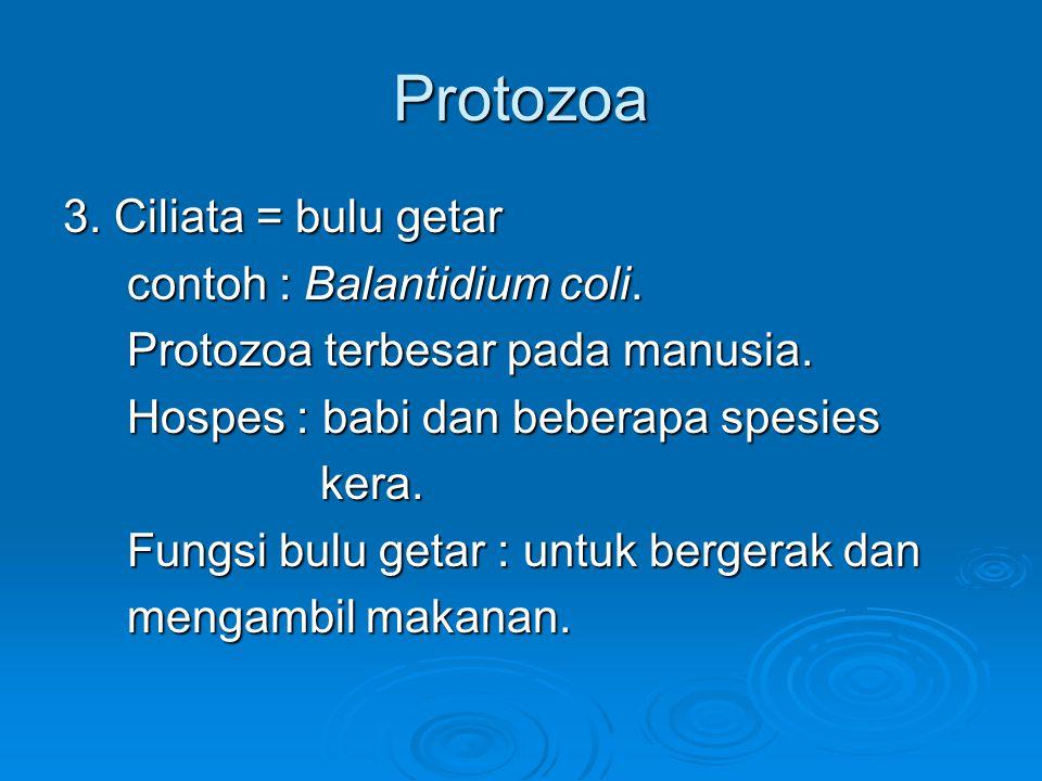 Protozoa 3. Ciliata = bulu getar contoh : Balantidium coli.