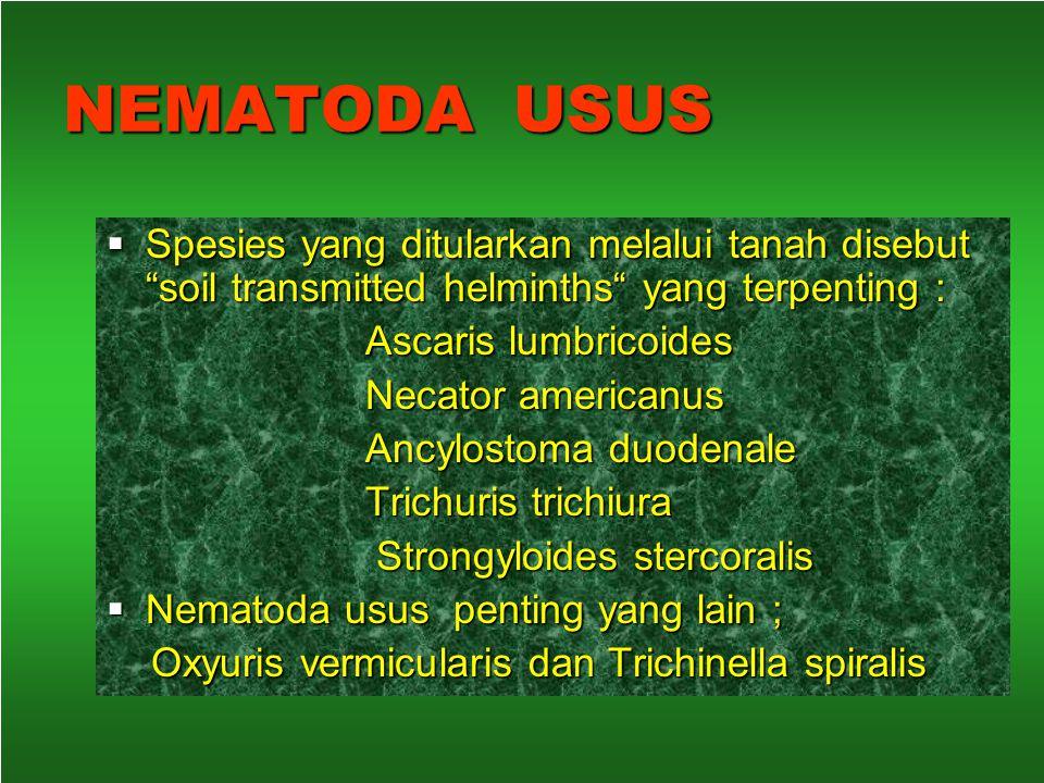 NEMATODA USUS Spesies yang ditularkan melalui tanah disebut soil transmitted helminths yang terpenting :