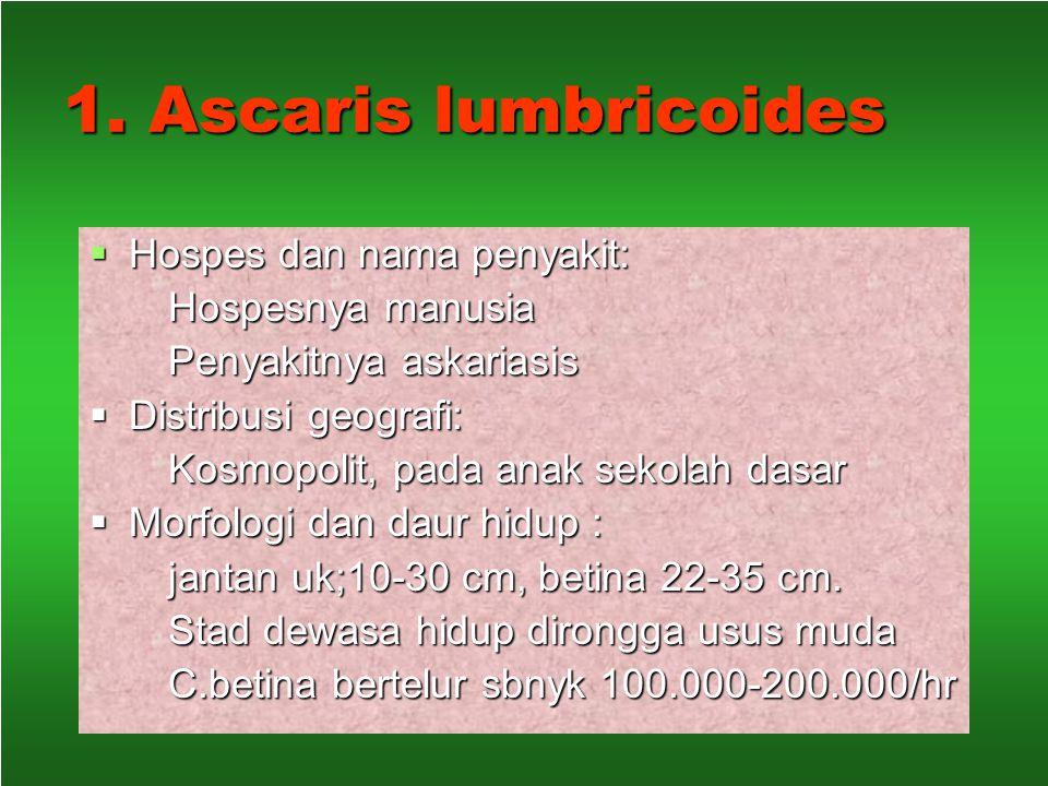 1. Ascaris lumbricoides Hospes dan nama penyakit: Hospesnya manusia