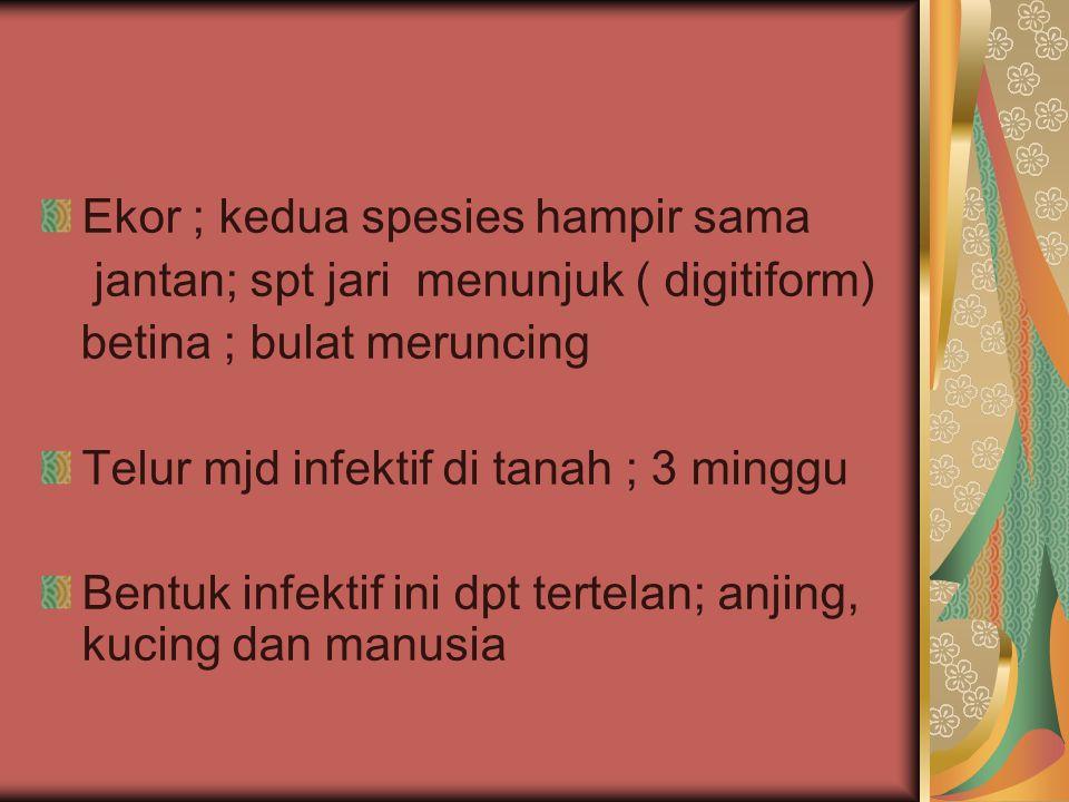Ekor ; kedua spesies hampir sama