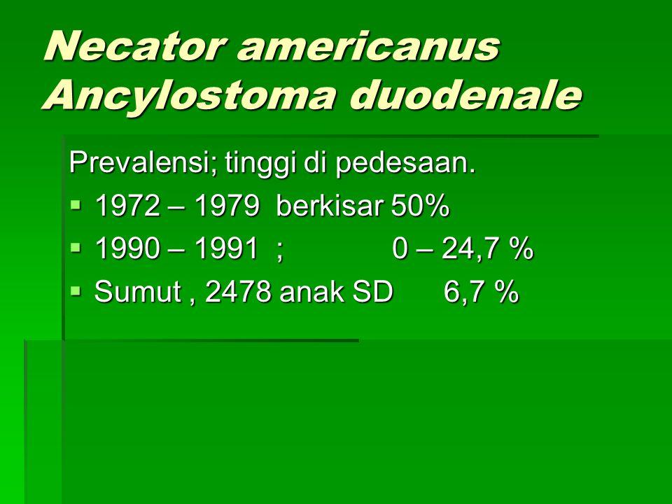 Necator americanus Ancylostoma duodenale