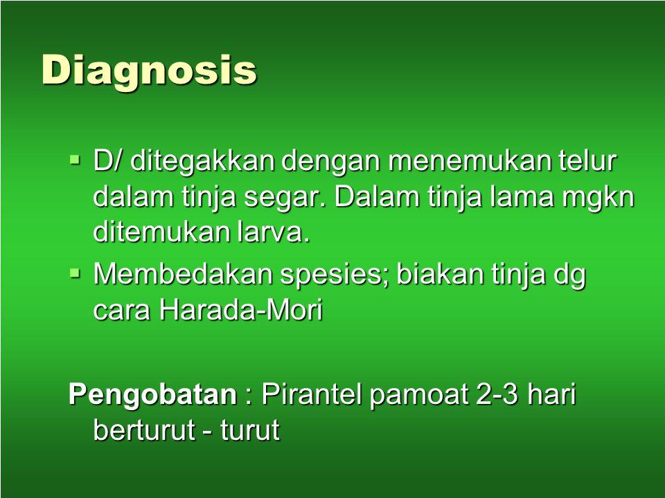 Diagnosis D/ ditegakkan dengan menemukan telur dalam tinja segar. Dalam tinja lama mgkn ditemukan larva.