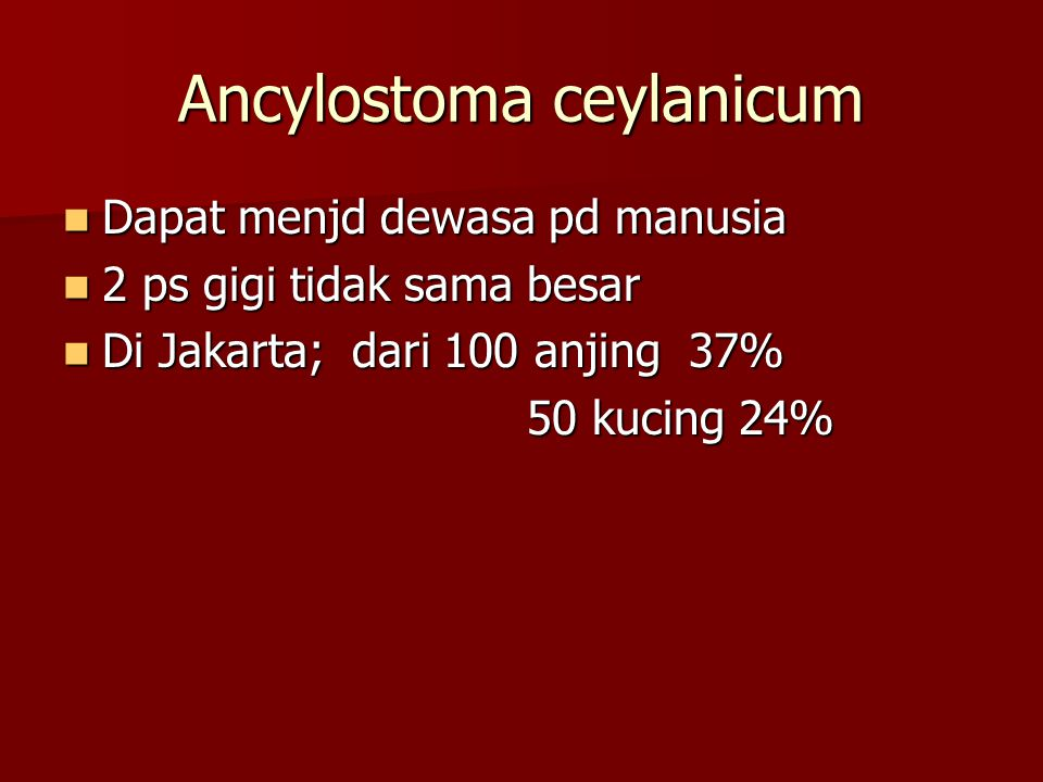 Ancylostoma ceylanicum