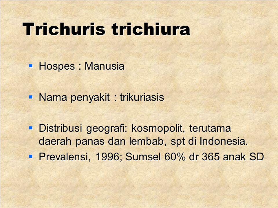 Trichuris trichiura Hospes : Manusia Nama penyakit : trikuriasis