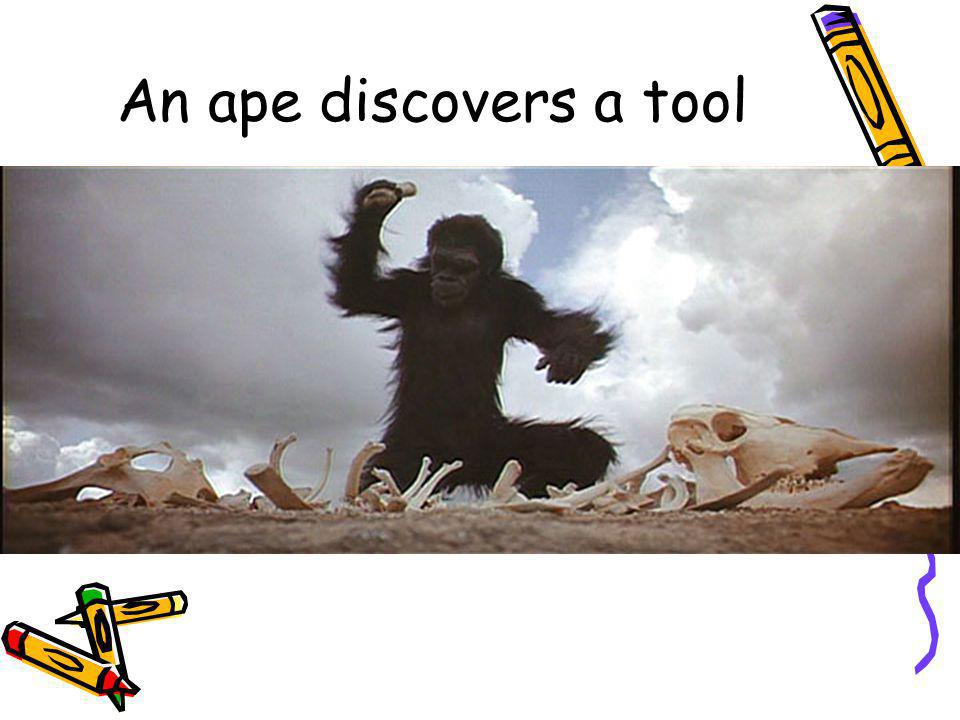 An ape discovers a tool 9