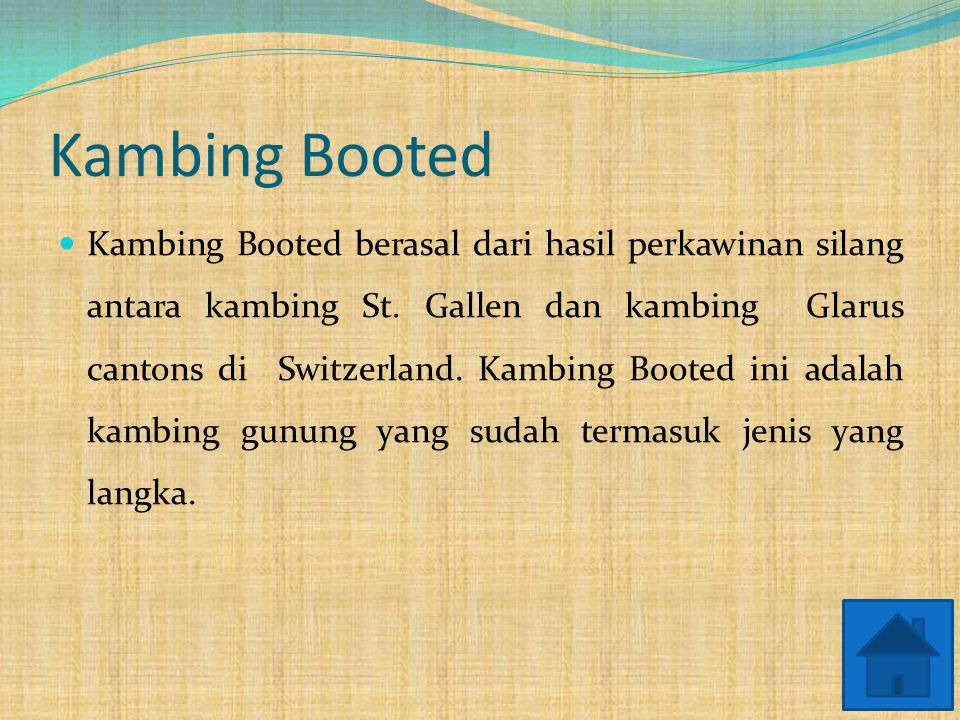 Kambing Booted