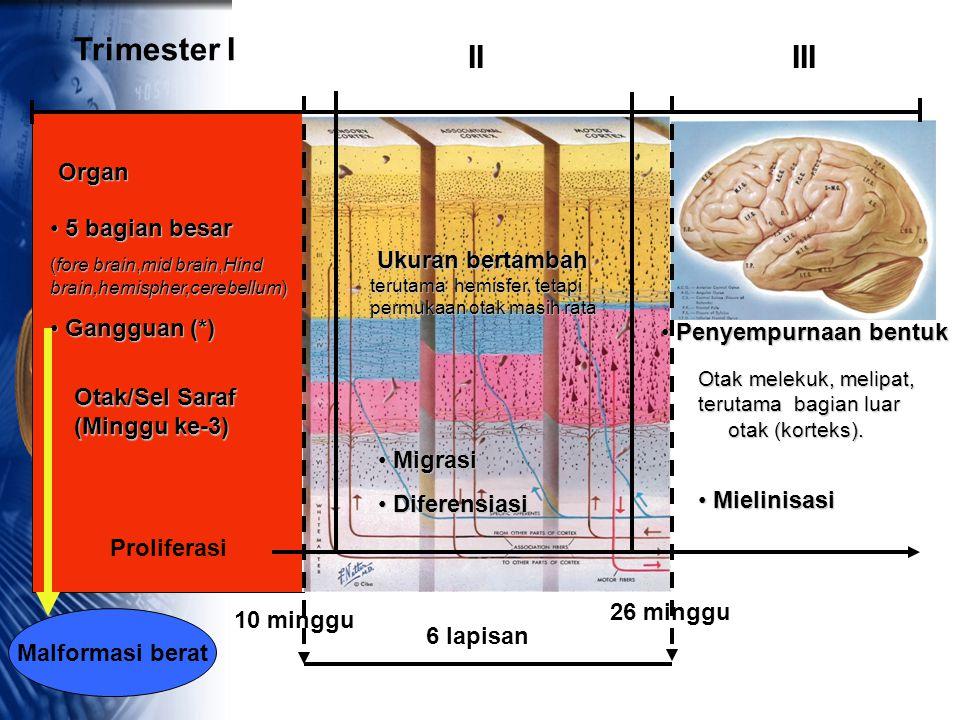 Trimester I II III Organ 5 bagian besar Ukuran bertambah Gangguan (*)