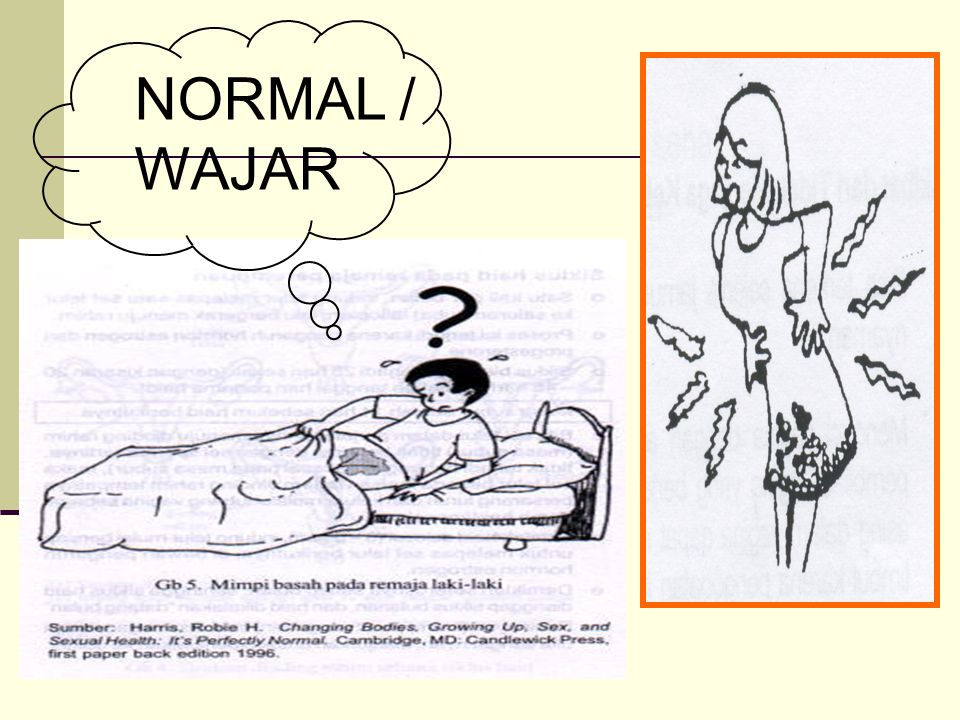 NORMAL / WAJAR