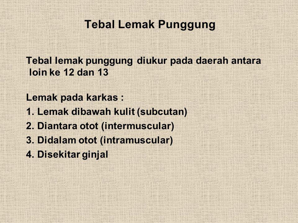 Tebal Lemak Punggung Tebal lemak punggung diukur pada daerah antara loin ke 12 dan 13. Lemak pada karkas :