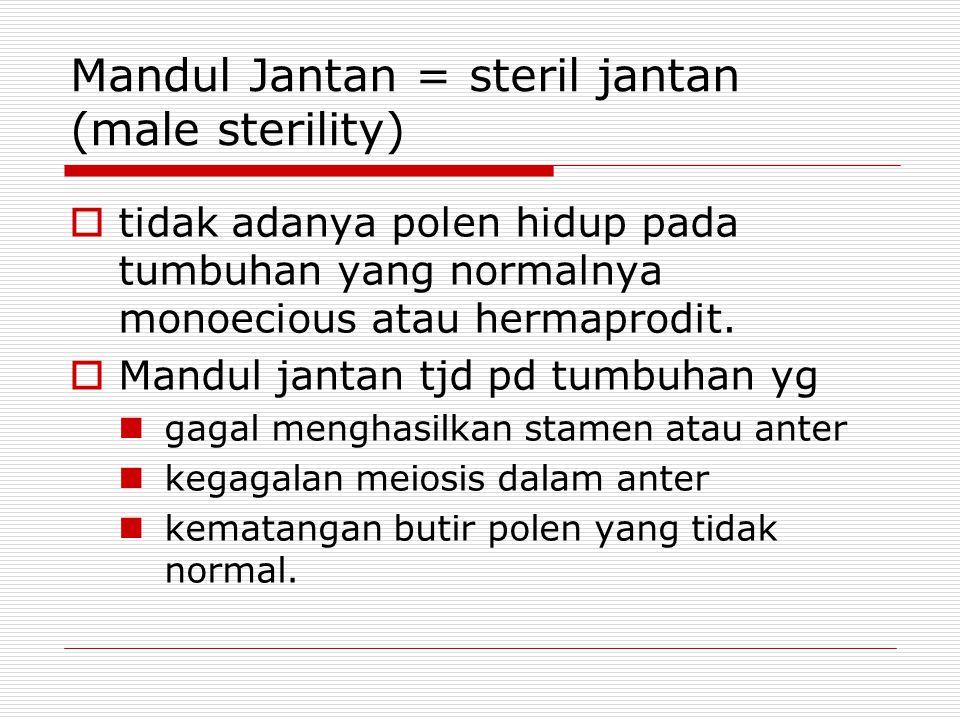 Mandul Jantan = steril jantan (male sterility)