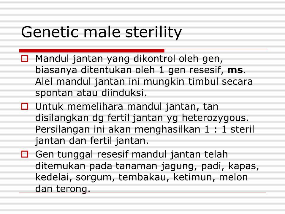 Genetic male sterility