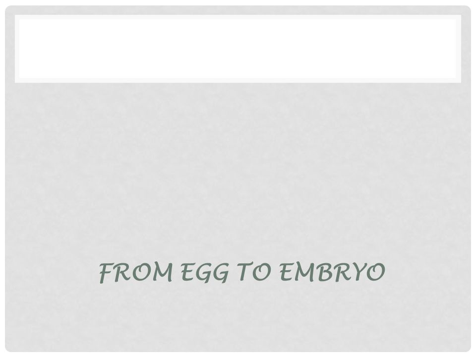 FROM EGG TO EMBRYO