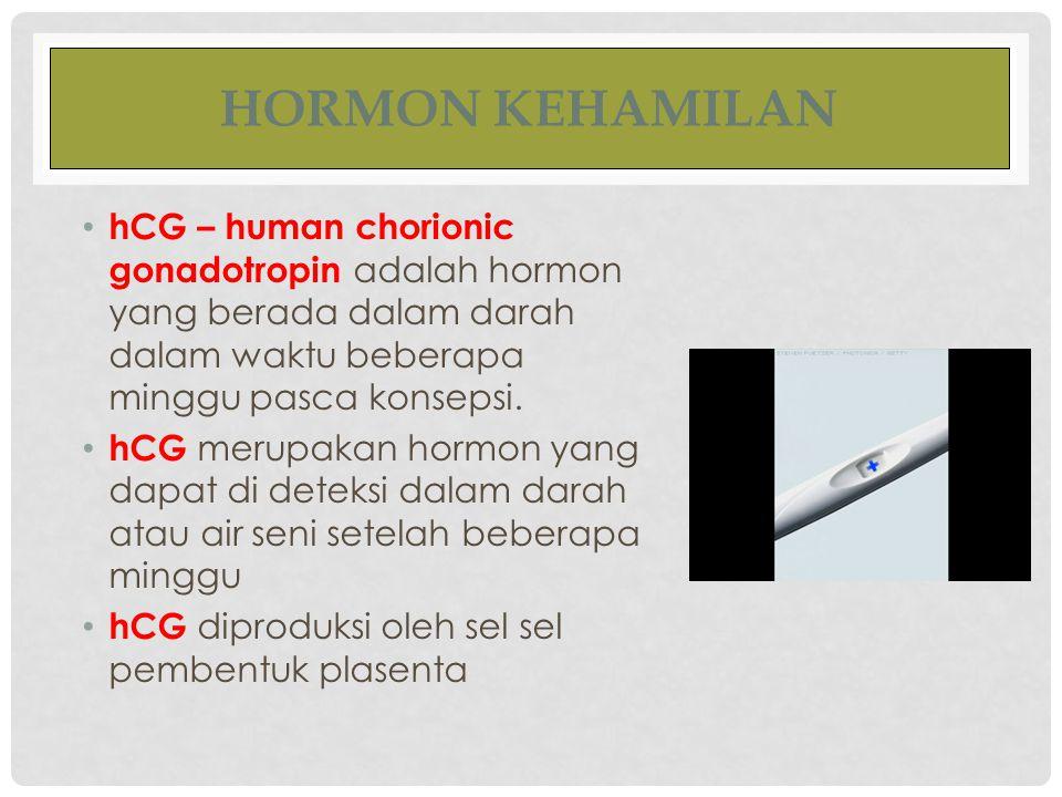HORMON KEHAMILAN hCG – human chorionic gonadotropin adalah hormon yang berada dalam darah dalam waktu beberapa minggu pasca konsepsi.