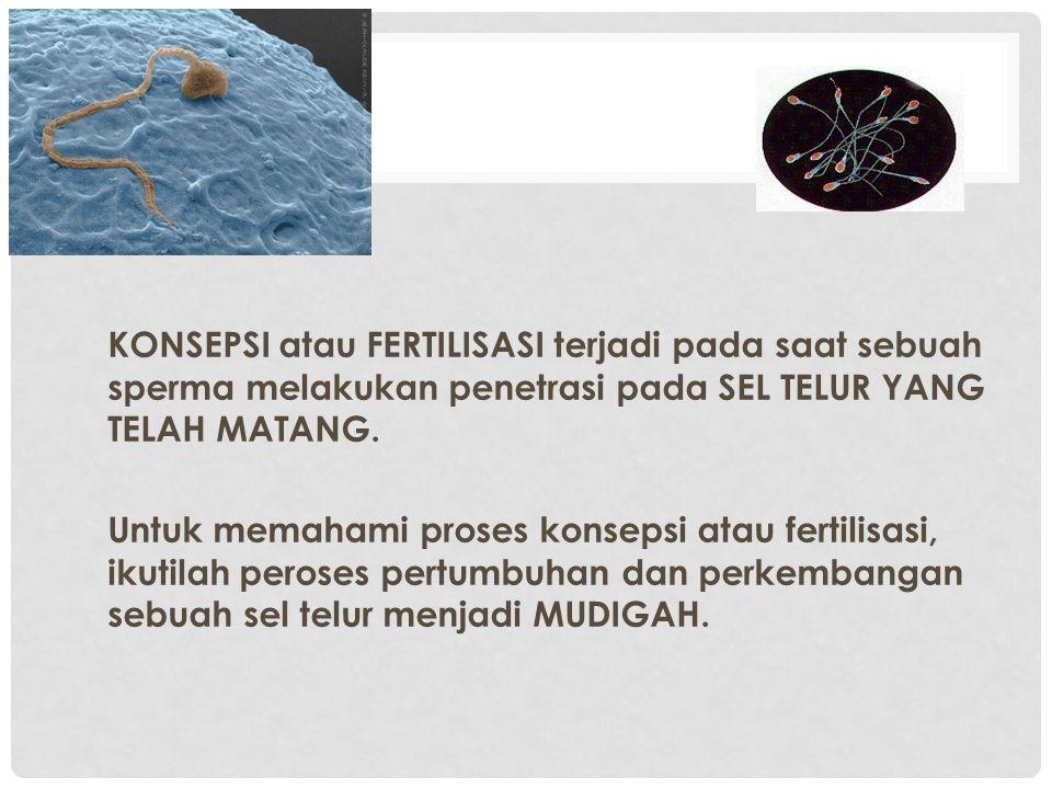 KONSEPSI atau FERTILISASI terjadi pada saat sebuah sperma melakukan penetrasi pada SEL TELUR YANG TELAH MATANG.