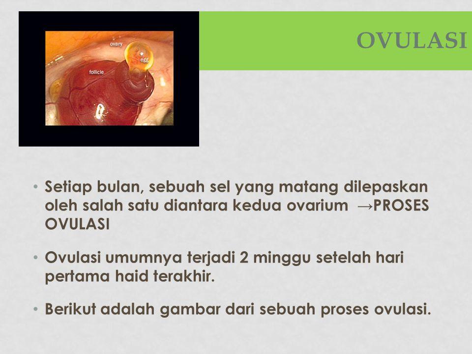 OVULASI Setiap bulan, sebuah sel yang matang dilepaskan oleh salah satu diantara kedua ovarium →PROSES OVULASI.