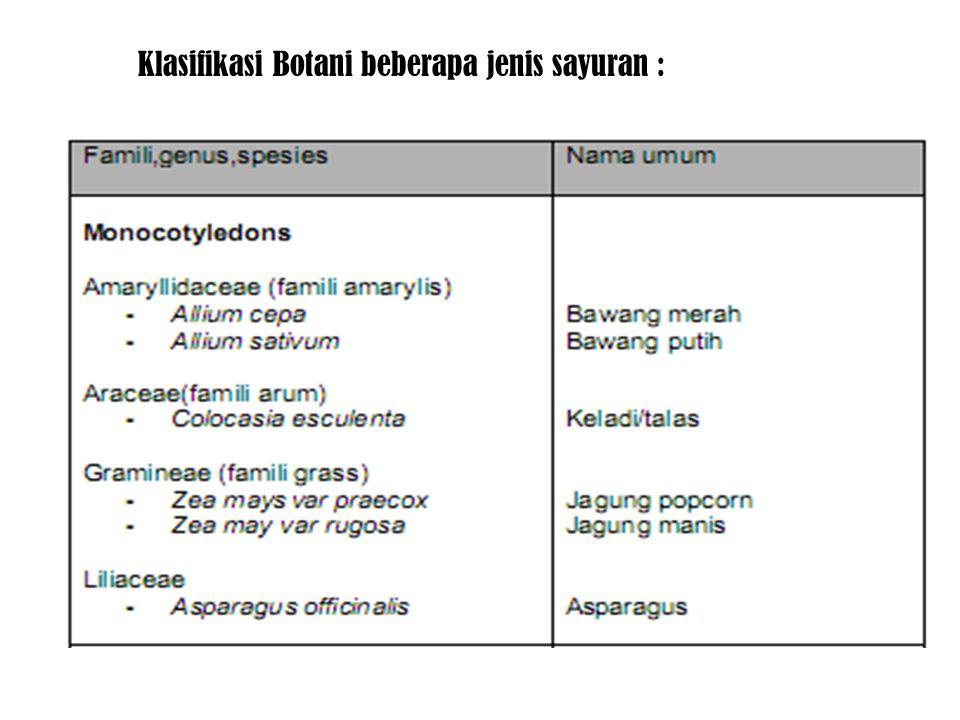 Klasifikasi Botani beberapa jenis sayuran :