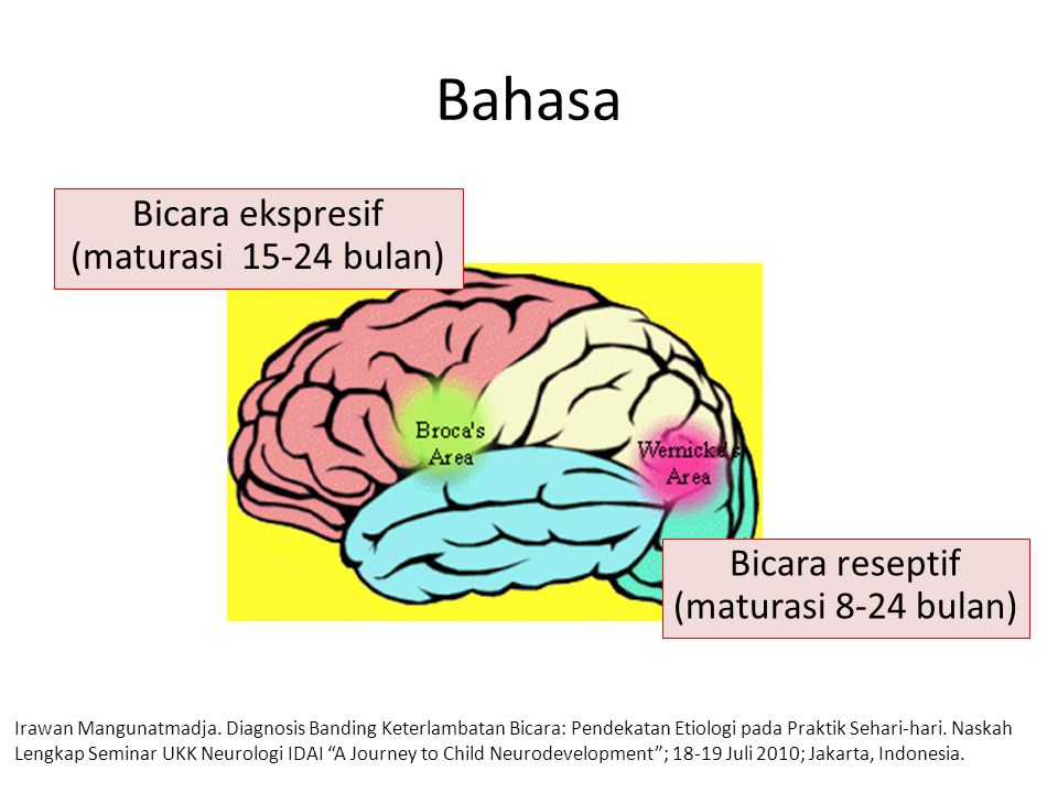Bahasa Bicara ekspresif (maturasi 15-24 bulan)