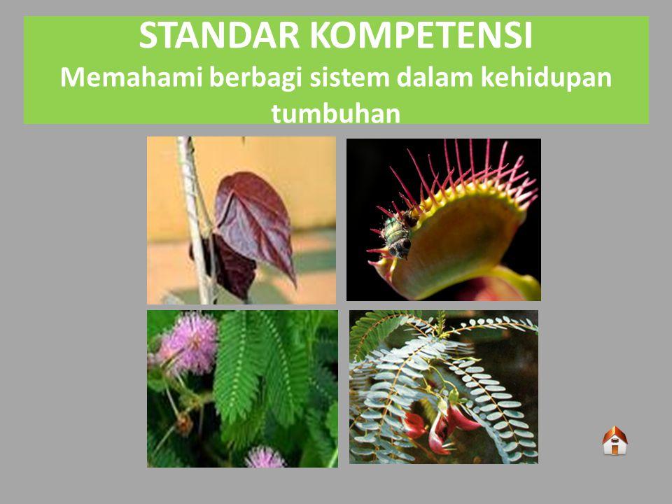 STANDAR KOMPETENSI Memahami berbagi sistem dalam kehidupan tumbuhan