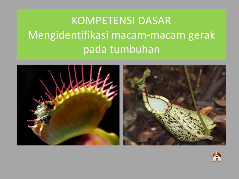 KOMPETENSI DASAR Mengidentifikasi macam-macam gerak pada tumbuhan